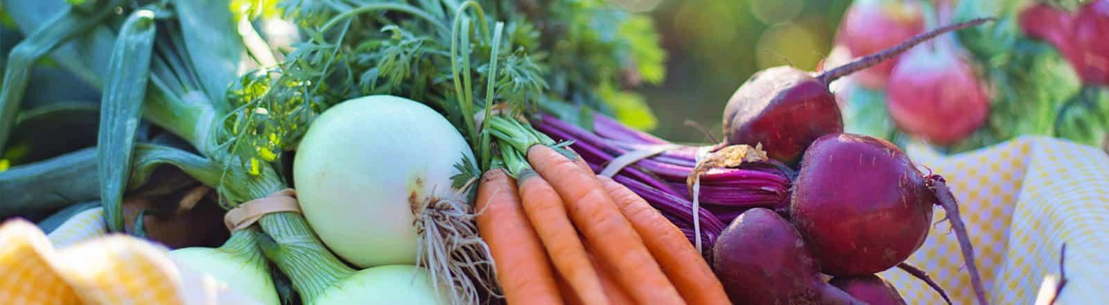 nutrición y visión general Logroño